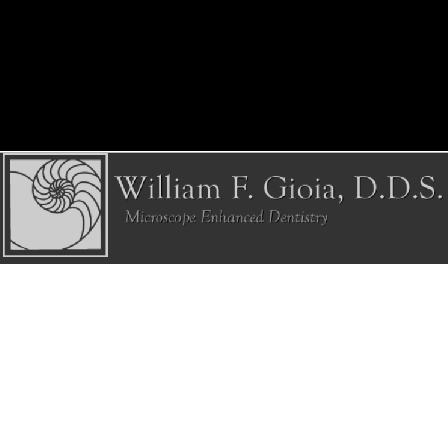 Dr. William F Gioia